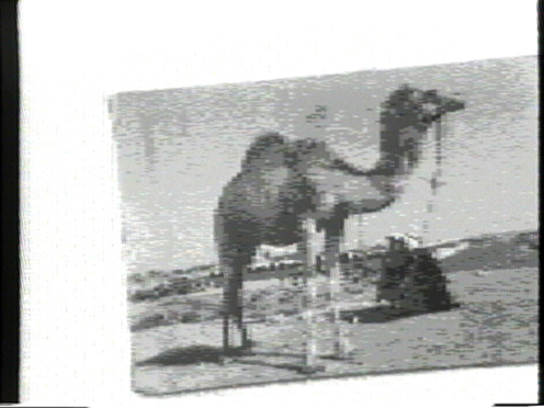 Peer Bode video still from Camel with Window Memory 1983
